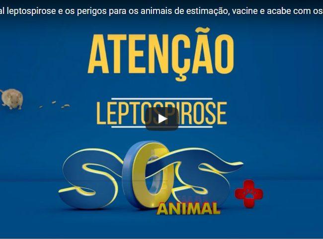 Leptospirose e os perigos para os animais de estimação, vacine e acabe com os ratos.