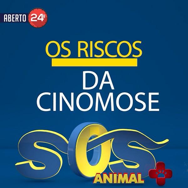 Os riscos da Cinomose, vacine seu animal!