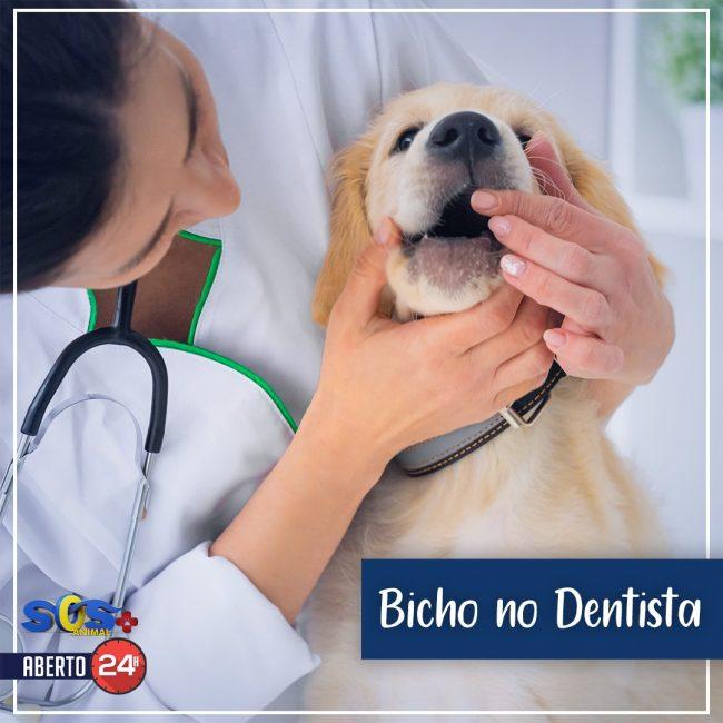 Bicho no Dentista