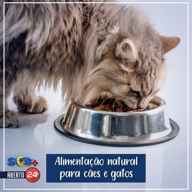 Alimentação natural para cães e gatos