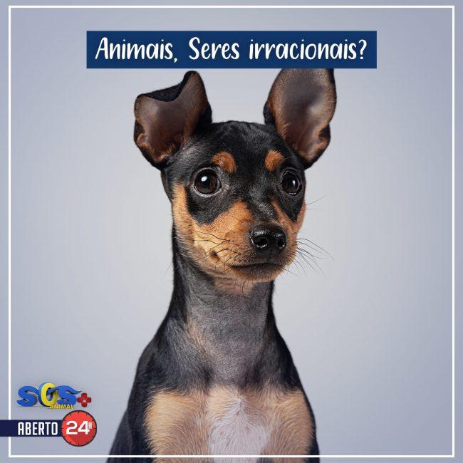 Animais, seres irracionais?